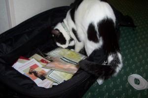 Harry cat2