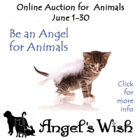 AngelsWishAuction
