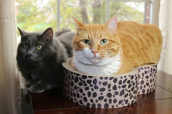 cat cardboard scratcher, heart bed, valentine's gift for cat