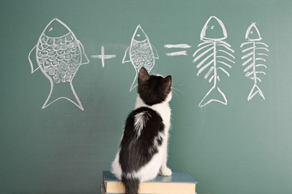 omega 3 benefits for cats, photo source; 123rf.com